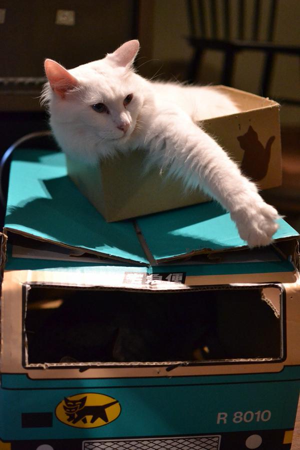 日本的黑貓宅急便宅配箱太可愛 民眾買回家貓咪全住進去