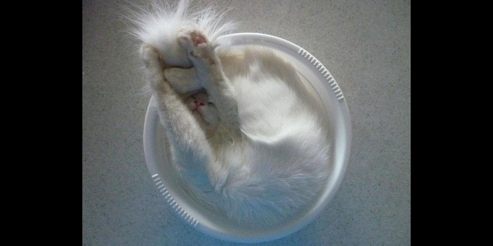 26隻可以睡在任何地方的超液體貓咪