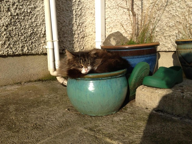 The wily cat plant: