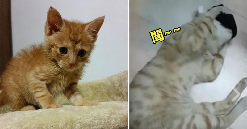 流浪小橘貓重病一度沒有了呼吸 他一句「醒來就養你」帶來奇蹟!