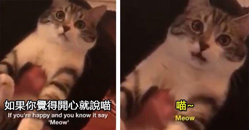 貓咪也會唱歌!如果你覺得開心 你就說一聲「喵♥」吧