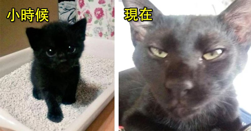 18張奴才曬「主子成長對比圖」 網噴淚:我真的是在養同一隻貓嗎QQ
