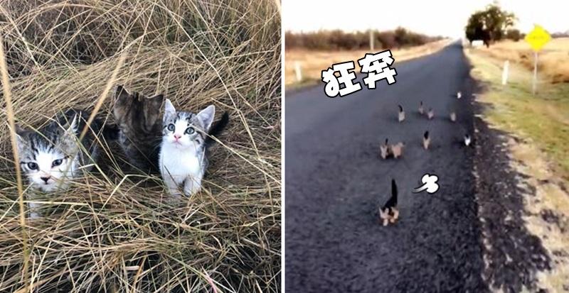 影/遛狗到一半被包圍 10隻小貓跟著她屁股狂奔:娘!帶偶們走~